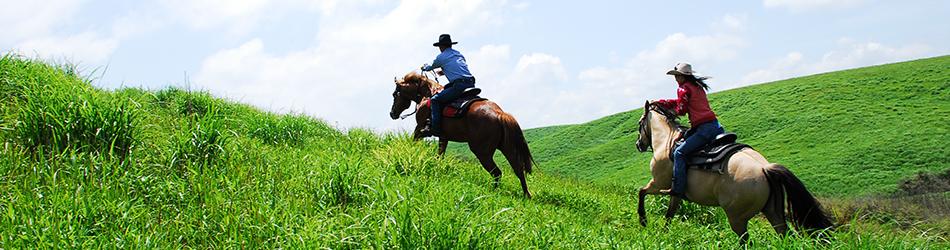 阿蘇エルパティオ牧場